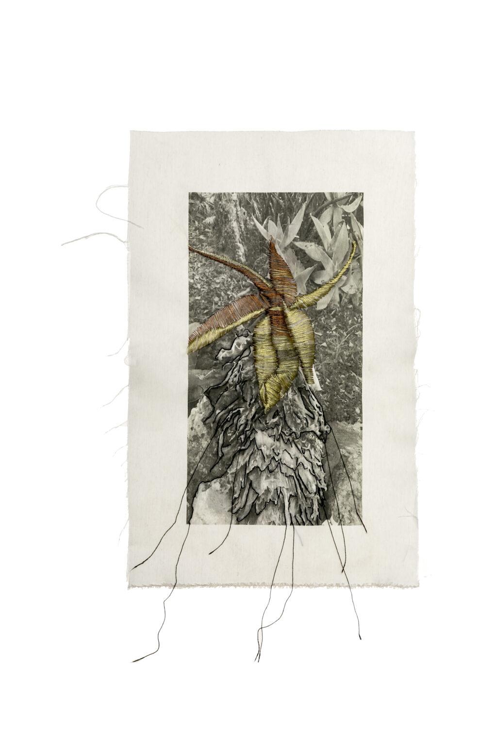 קקטוס רוקד יוצרת ג'רי שריג מתוך התערוכה שיח.גלריה לשבוע האיור 2019 צילום אבי ולדמן